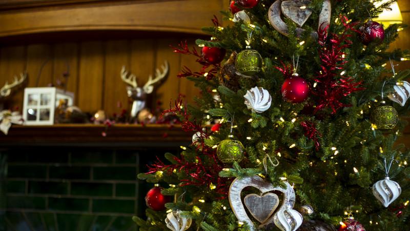 Hayes Garden World Christmas Tree Shoot with Tony West and Gemma Hepworth